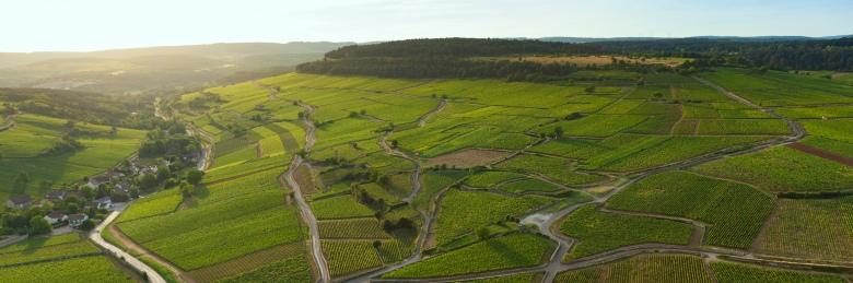 Vignoble de la Cote de Beaune, vue sur le vignoble de Pommard.